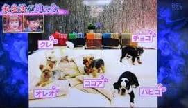 浜崎あゆみ 愛犬